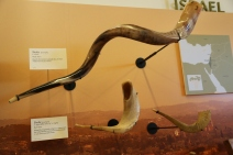 Shofar - horn from a kudu - from Israel