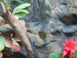 Poison Dart Frog - colors are unreal!