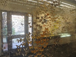 More than 4,000 insects representing over 500 different species commonly found in Santa Barbara in this case!