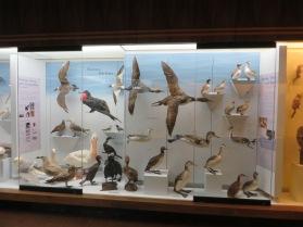 Piscivores, fish eaters