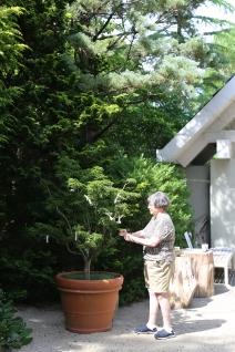 Yoko Ono wishing tree